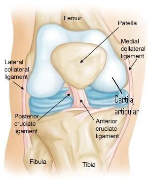 Gel masaj pentru articulații și mușchi - Supramax, m : BebeTei