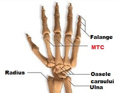 condroitină cu glucozamină cât timp se bea artroza deformantă acută a genunchiului