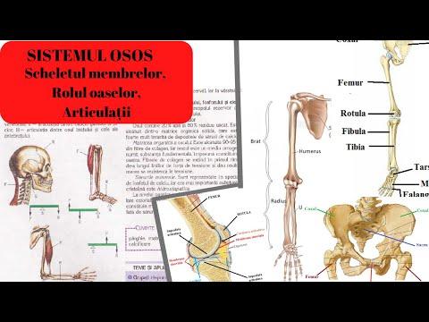 tratamentul articulației de hamei Разрыв передней связки лечения коленного сустава