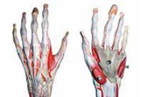 numele bolii articulațiilor mâinilor durere la mâna dureri articulare