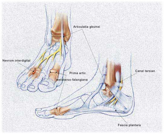 boli ale articulației cotului 2 grade durere de genunchi periartrita
