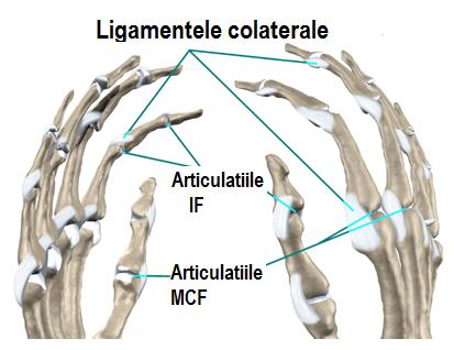 osteocondroza unguentului gâtului pentru durere statisticile bolilor de șold