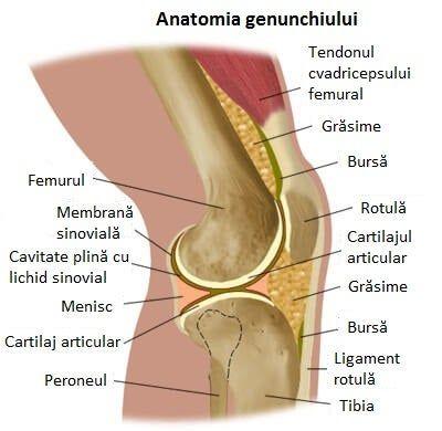 care sunt durerile coxartrozei articulației șoldului