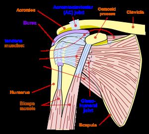 artrita acută a gleznei provoacă un tratament prognostic ce se poate smulge când doare articulația genunchiului