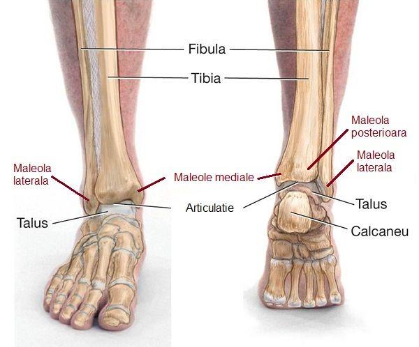 articulații la nivelul genunchiului leziuni la genunchi la ghemuit