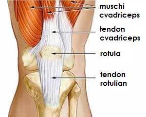 pastile pentru durere în articulațiile picioarelor articulațiile degetelor umflate și dureroase