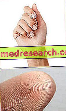 ulei de cedru pentru tratamentul articulațiilor dacă articulațiile de pe picior doare