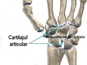 articulațiile medicinii piciorului
