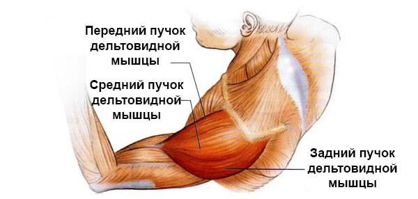 articulațiile musculare rănesc umerii