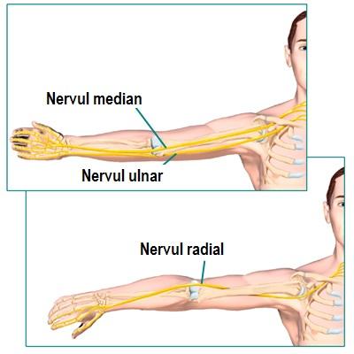ce doare în articulația cotului artroza articulației umărului drept
