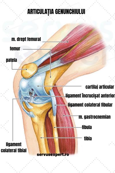crunch articulații în genunchi și doare