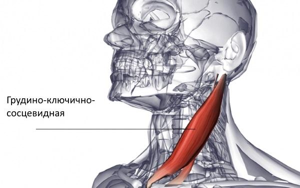 deteriorarea buzei cartilaginoase a articulației umărului dureri articulare ale durerilor osoase