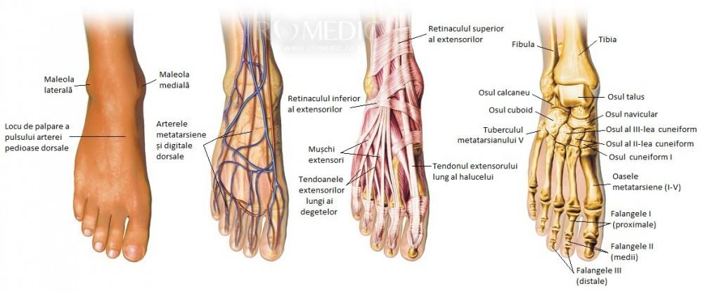 durere în articulația inferioară a piciorului stâng