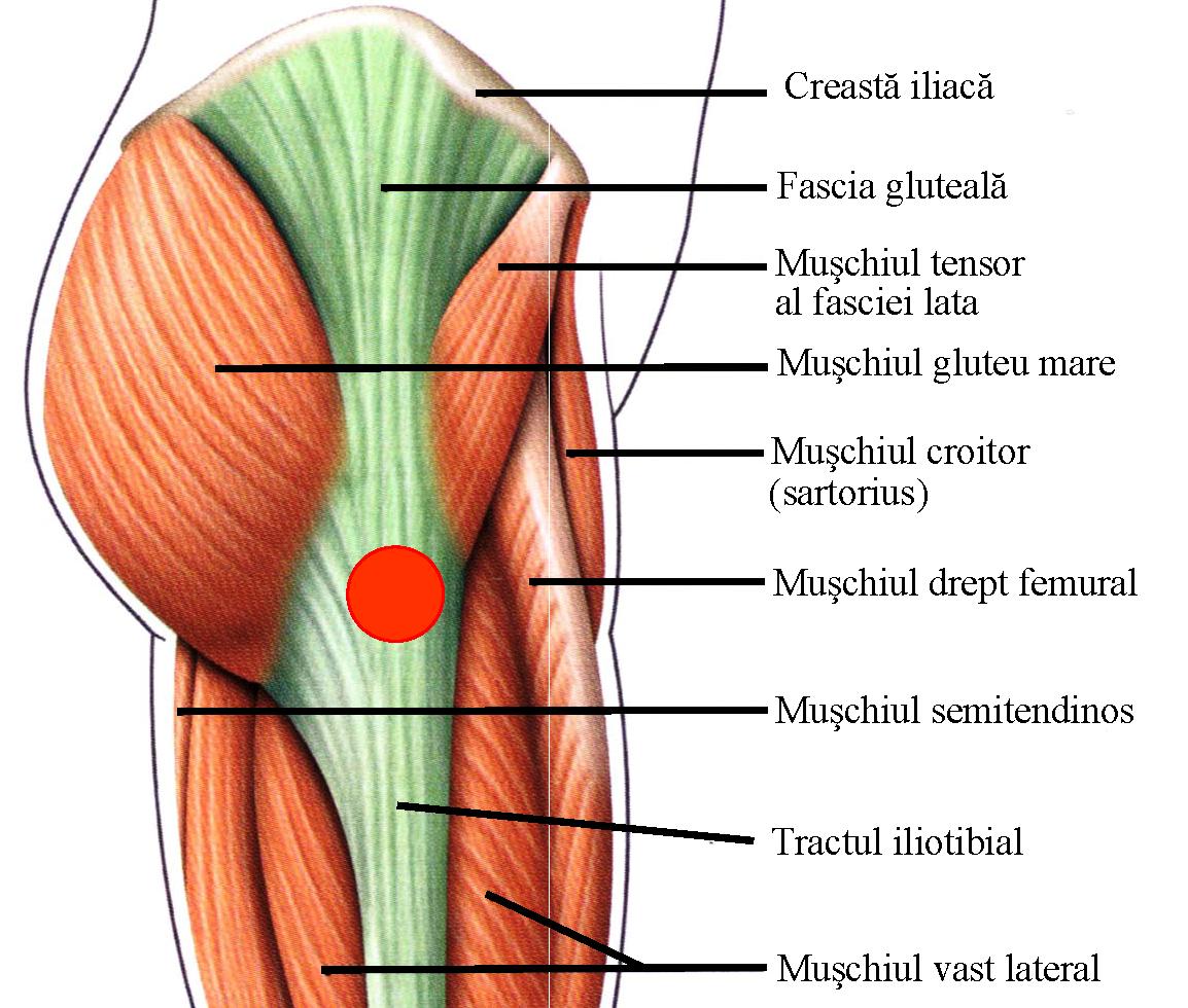durere în proiecția articulației șoldului
