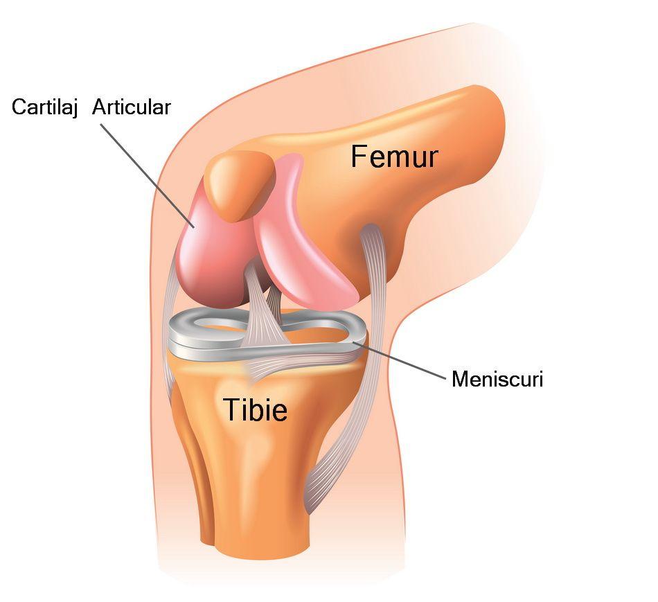 dureri articulare după artroplastie ce să facă dureri articulare la flexia unui deget