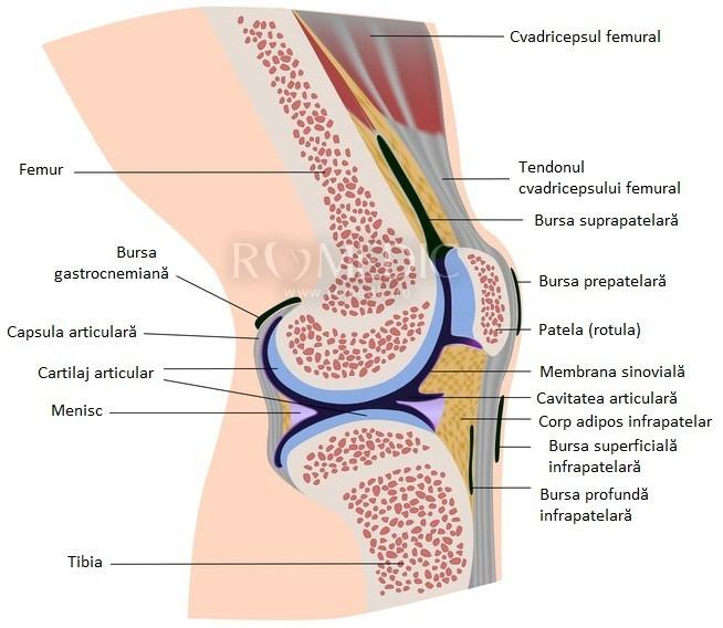 fisurarea și durerea în articulațiile genunchiului medicamente pentru bursita umărului
