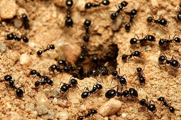 furnicile pentru tratamentul articular artrita bratului drept al umarului
