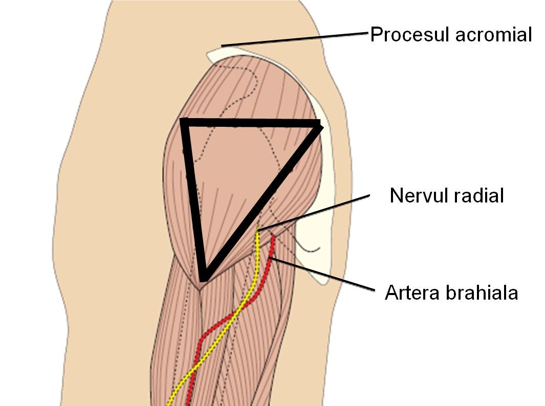 Prospect Medicament - Sinovial Medicamente injectate în articulație