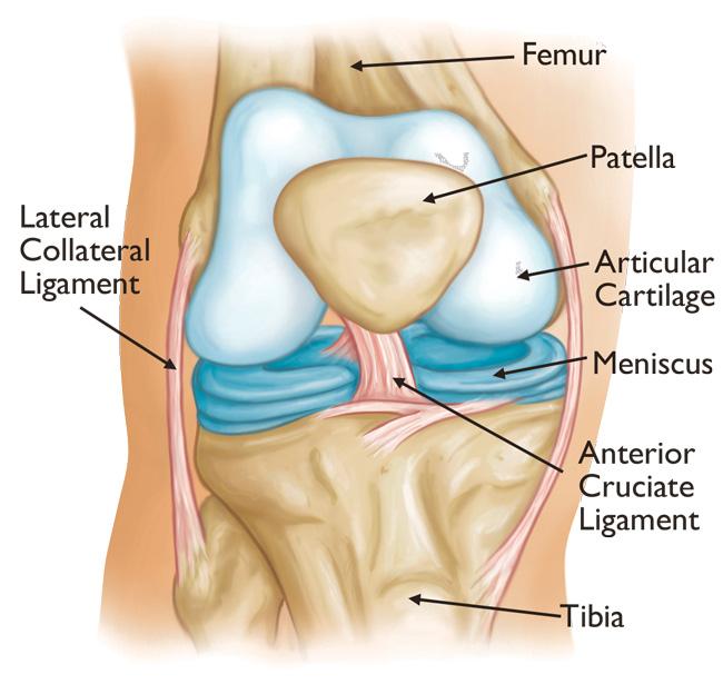 dureri de articulații ale mâinilor ce să facă cum să freci articulațiile dacă doare
