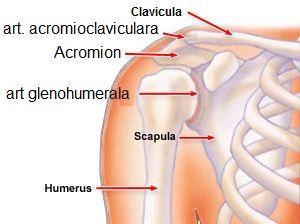 tratamentul articulației umărului după căderea pe braț