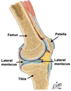 tratarea meniscului genunchiului modul în care brusturele ajută la durerile articulare